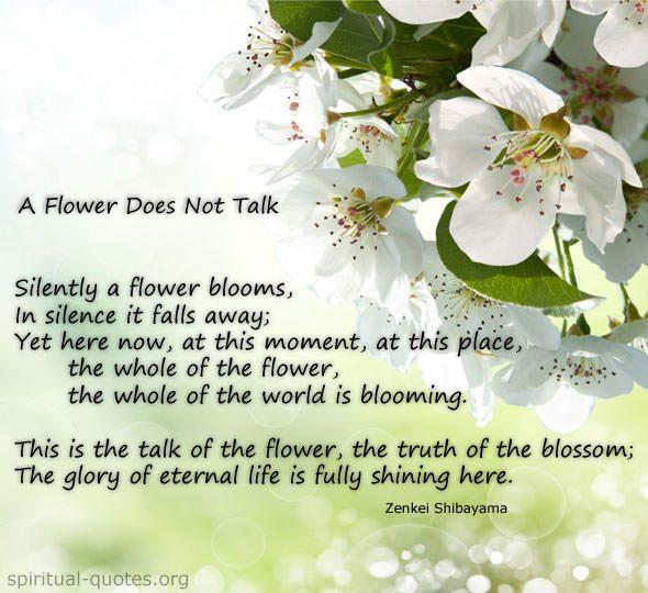 Quote by Zenkei Shibayama